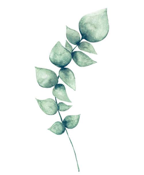 watercolor eucalyptus leaf - pastel stock illustrations