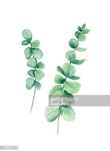 水彩画ユーカリの葉 - ユーカリの葉点のイラスト素材/クリップアート素材/マンガ素材/アイコン素材