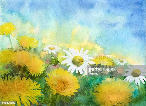 ilustraciones, imágenes clip art, dibujos animados e iconos de stock de acuarela cornejo prado - planta de manzanilla