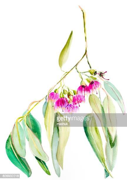 水彩花ユーカリ - ユーカリの木点のイラスト素材/クリップアート素材/マンガ素材/アイコン素材