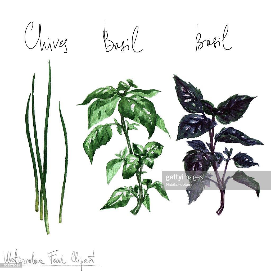 Aquarelles herbes de Clipart : Illustration