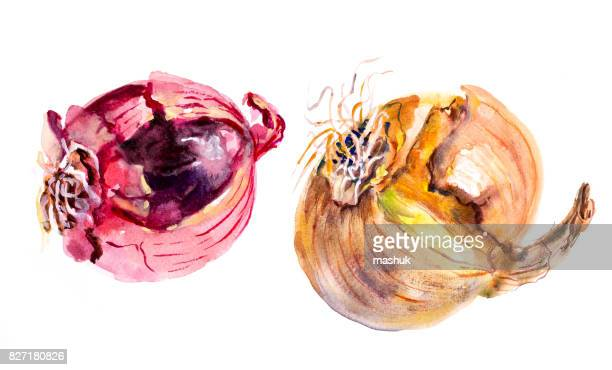 watercolor fruit and flower_onion - onion stock illustrations, clip art, cartoons, & icons
