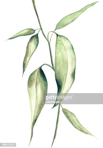 Watercolor leaves White background