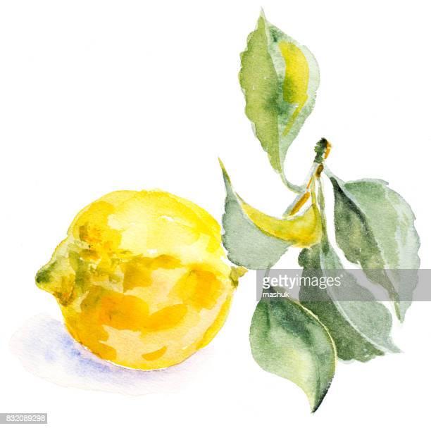 ilustrações, clipart, desenhos animados e ícones de aquarela de limão - limão amarelo