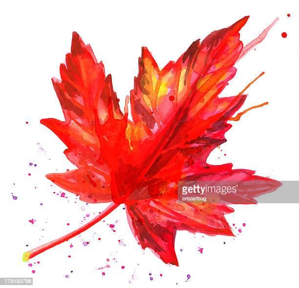 watercolor maple leaf - maple leaf stock illustrations