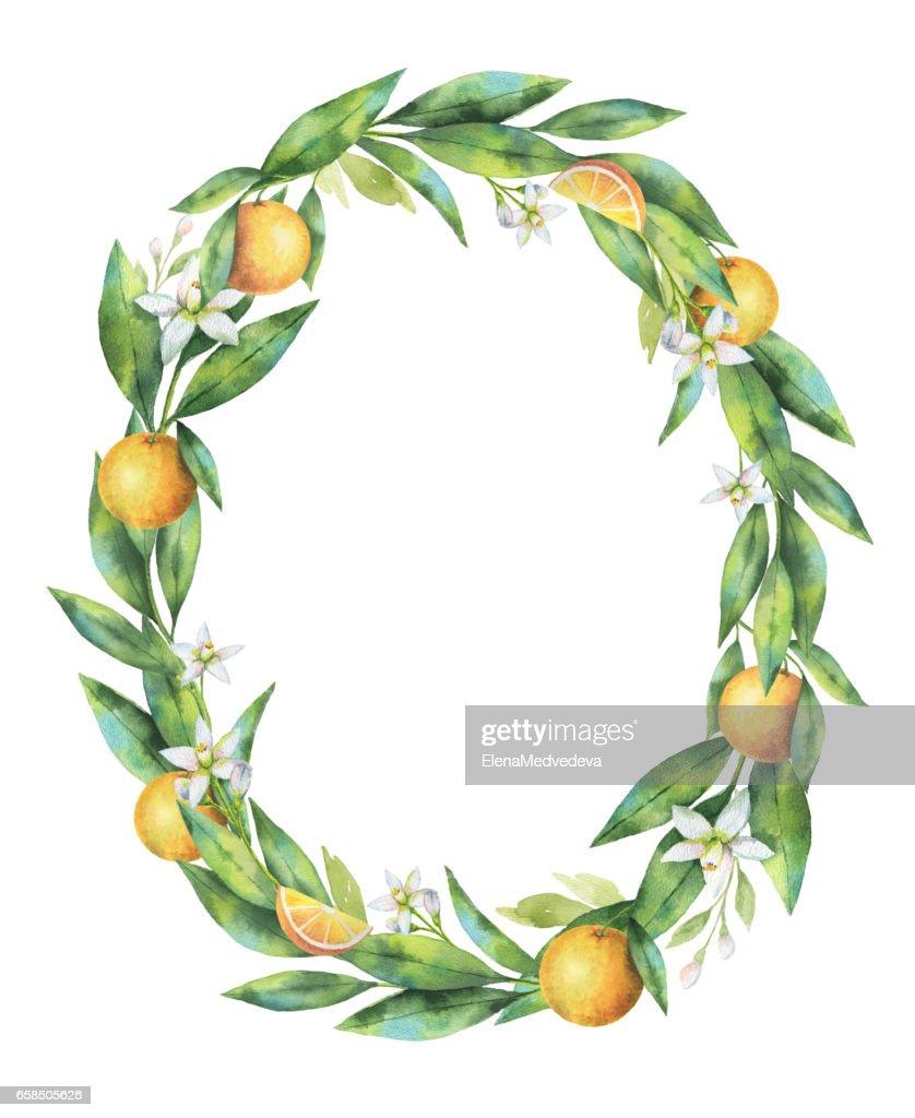 Ramo De Fruta Laranja Aquarela Moldura Oval Isolado No Fundo Branco Ilustracao Getty Images
