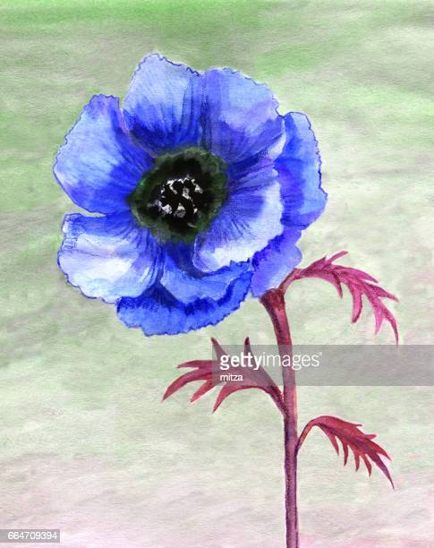 Watercolor painted blue anemone flower