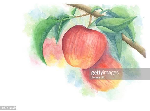 ilustraciones, imágenes clip art, dibujos animados e iconos de stock de pintura de acuarela de manzanas en un árbol con fondo desenfocado - manzano