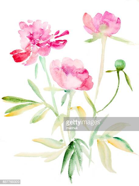 watercolor painting peony