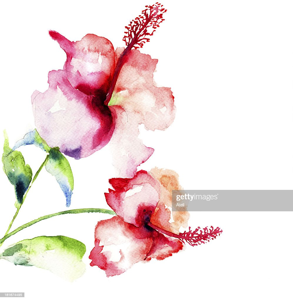 Watercolor Picture Of Red Hibiscus Flowers Stock Illustration
