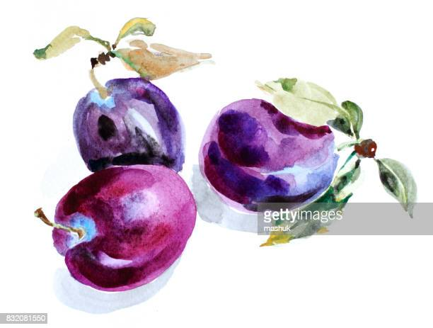 Watercolor plum