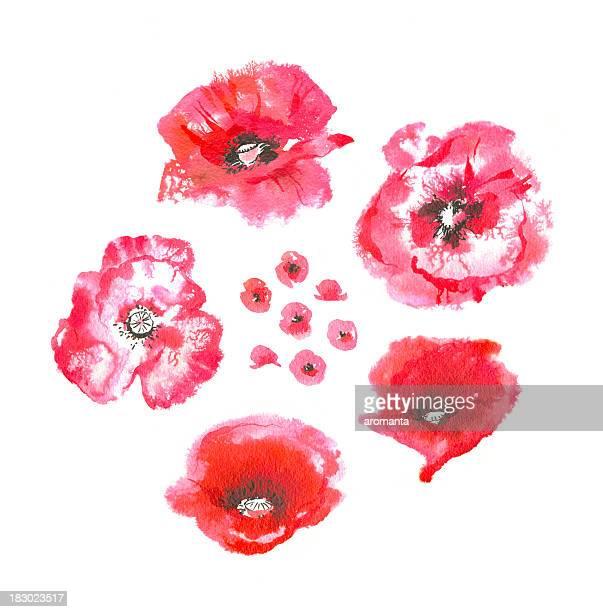 watercolor poppies - oriental poppy stock illustrations, clip art, cartoons, & icons