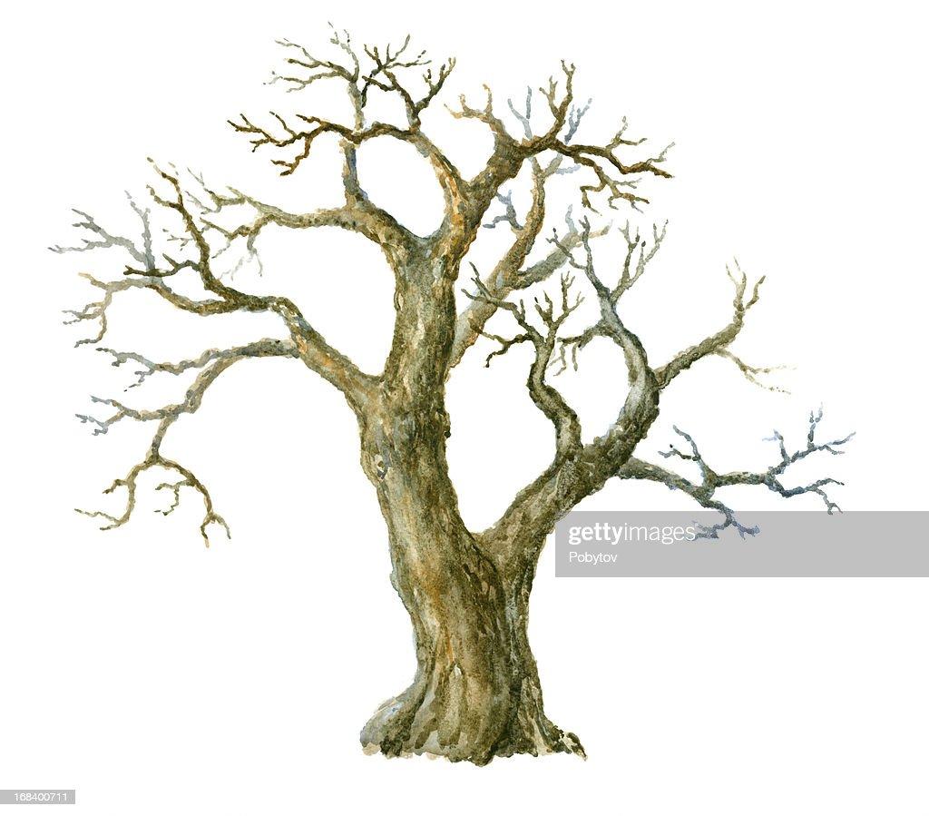 Watercolor tree : stock illustration