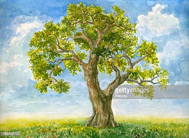 watercolor tree - tree trunk stock illustrations, clip art, cartoons, & icons