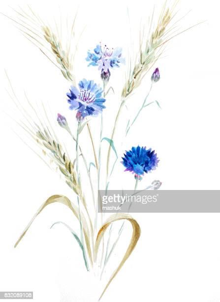 ilustraciones, imágenes clip art, dibujos animados e iconos de stock de aciano y trigo acuarela - espiga de trigo