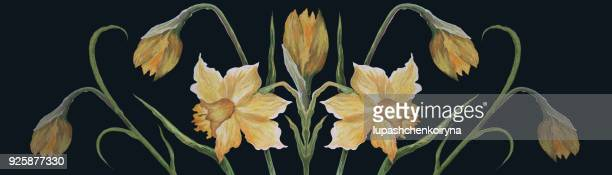 watercolor yellow daffodils - narcissus mythological character stock illustrations, clip art, cartoons, & icons