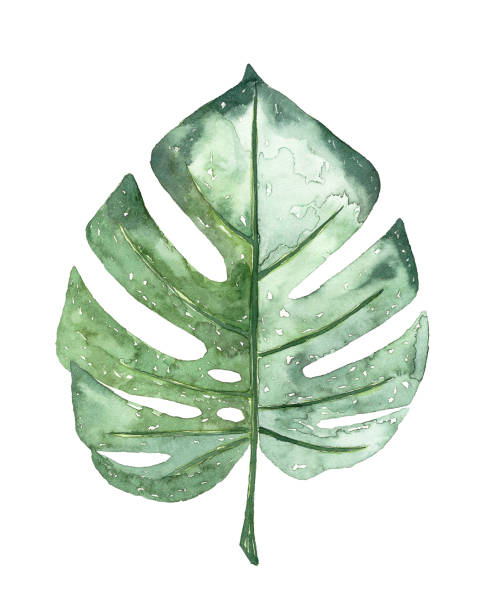 watercolour tropical leaf - pastel stock illustrations