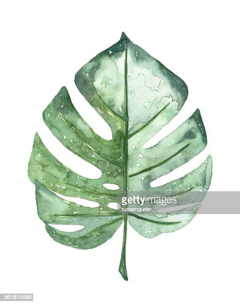 watercolour tropical leaf - tropical climate stock illustrations