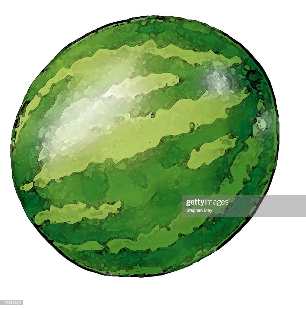 A watermelon illustration on a white backdrop : Illustration