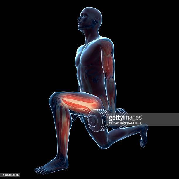 ilustrações, clipart, desenhos animados e ícones de weight training, artwork - perna humana
