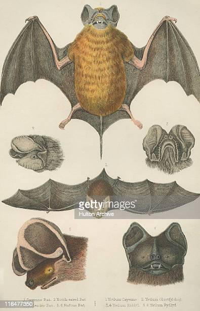 welsh bats - 1800~1809年点のイラスト素材/クリップアート素材/マンガ素材/アイコン素材