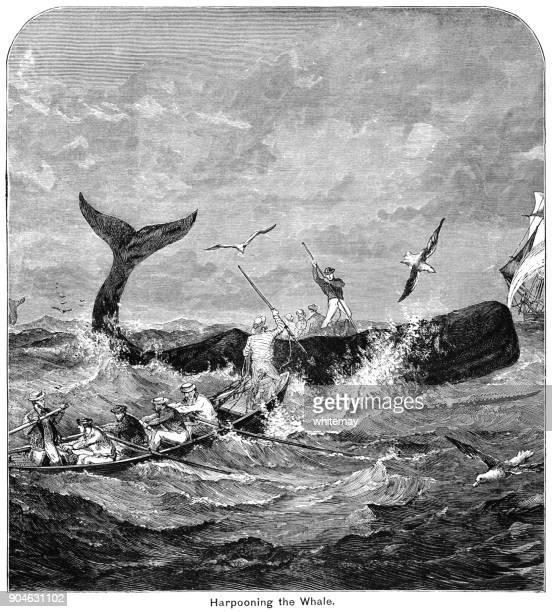 illustrations, cliparts, dessins animés et icônes de chasseurs de baleines harponnant une baleine dans les mers agitées - baleine