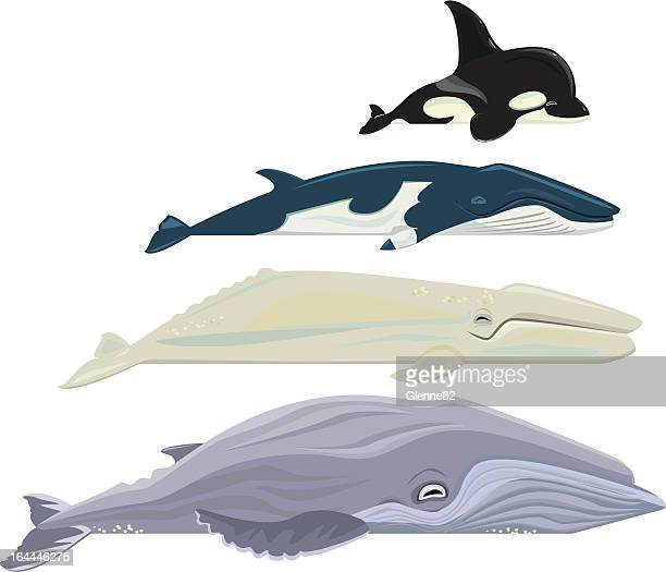 whales - killer whale stock illustrations, clip art, cartoons, & icons