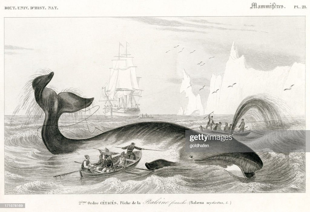 whaling, historic Illustration, 1849 : stock illustration