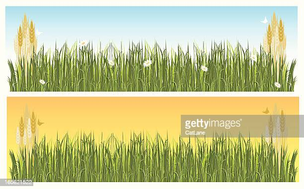 wheat field banners - corn stock illustrations, clip art, cartoons, & icons