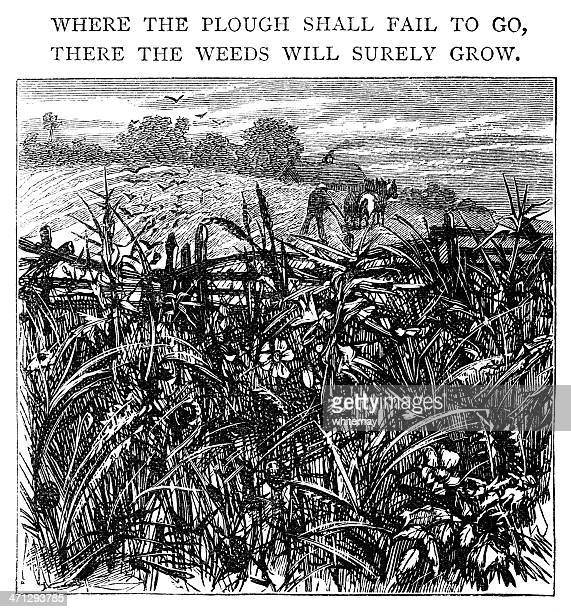 where the plough doesn't go, weeds will grow - fool stock illustrations, clip art, cartoons, & icons