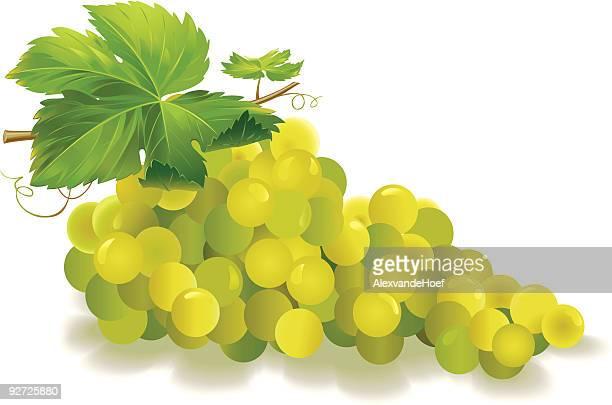 Blanco uvas con hoja