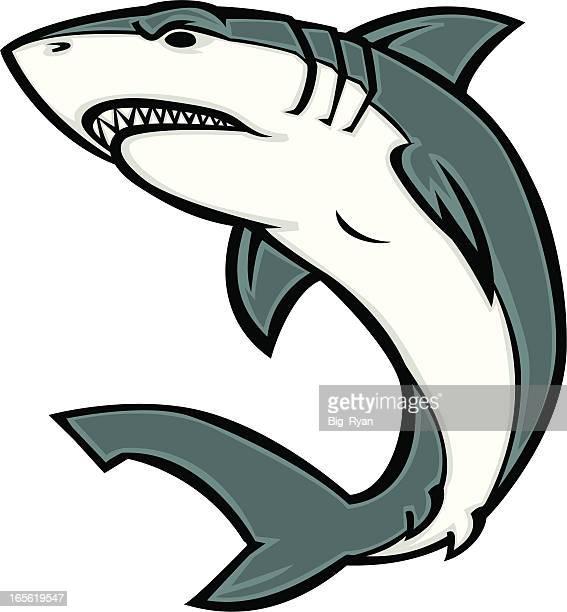 white shark - great white shark stock illustrations, clip art, cartoons, & icons