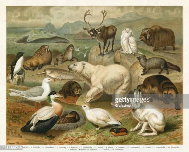 wild animals in the arctic region illustration - animal wildlife stock illustrations