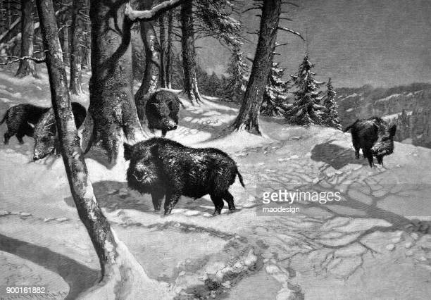 wild boars in the forest in winter time - 1896 - 1896 stock illustrations, clip art, cartoons, & icons