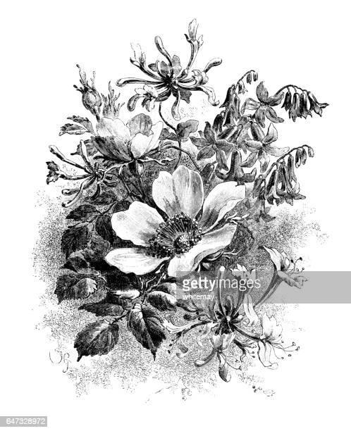wild honeysuckle, bluebells and roses - victorian engraving - arrowwood stock illustrations, clip art, cartoons, & icons