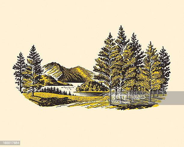 wilderness lake - wilderness stock illustrations