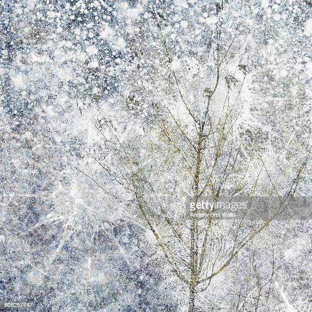 winter branches against a snow filled sky - head above water stock illustrations