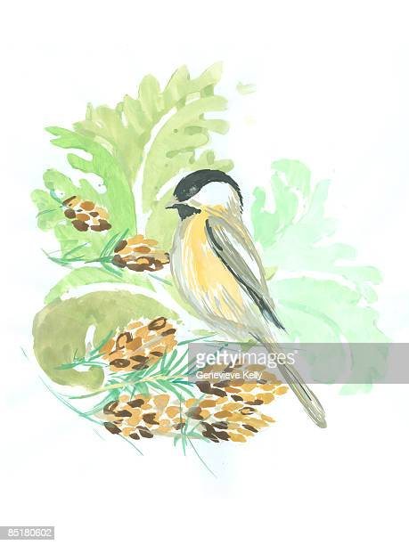 a winter chickadee bird with pine cones and leaves - plant stage stock illustrations, clip art, cartoons, & icons