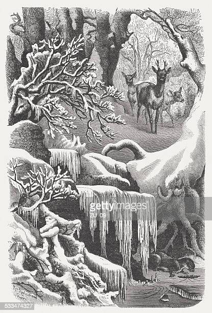 winter forest, wood engraving, published in 1872 - giant otter stock illustrations