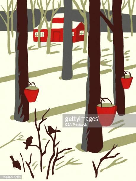 winter scene of maple trees tapped for sap - maple tree stock illustrations