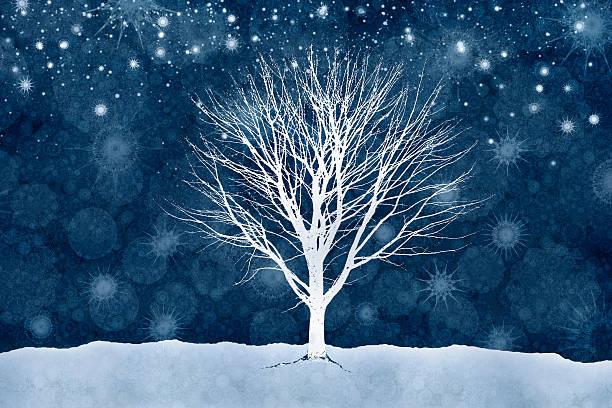 Winter Tree Beneath A Starlit Sky Wall Art