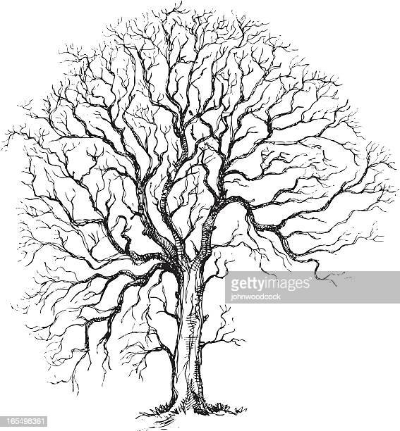 winter tree drawing - pen and ink stock illustrations, clip art, cartoons, & icons