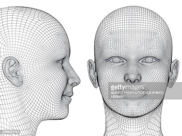 wireframe heads - graph stock illustrations
