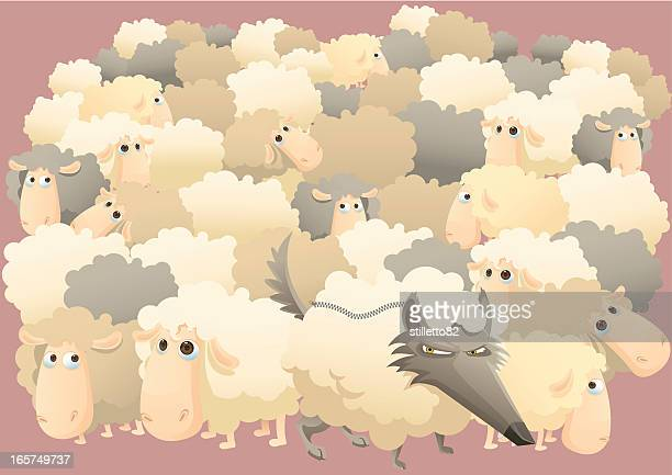 wolf and lot of sheeps - sheep stock illustrations, clip art, cartoons, & icons