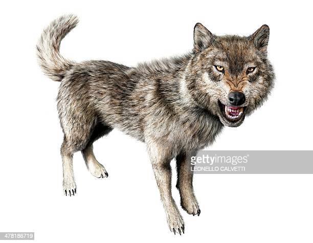 wolf, artwork - 膝から上の構図点のイラスト素材/クリップアート素材/マンガ素材/アイコン素材
