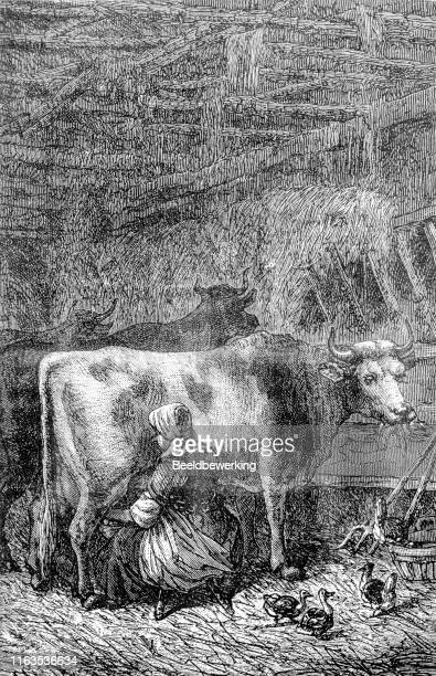 woman milking a cow in the stable with some ducks as her company - milking stock illustrations, clip art, cartoons, & icons