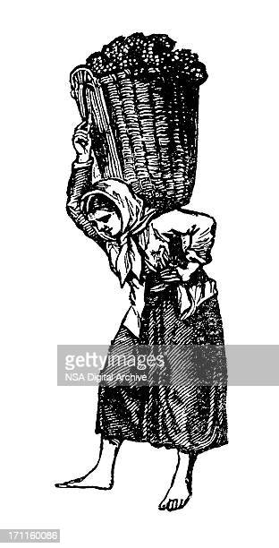 woman picking wine harvest | vintage vineyard clipart - vine stock illustrations