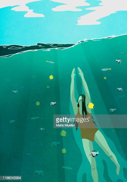 woman swimming underwater in ocean surrounded by fish - wildlife stock illustrations