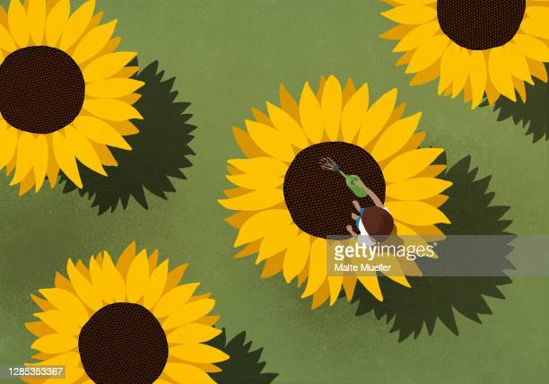 woman watering large sunflowers on green background - leisure activity stock illustrations