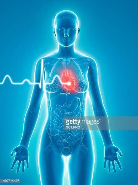 woman's heartbeat, artwork - human heart beating stock illustrations